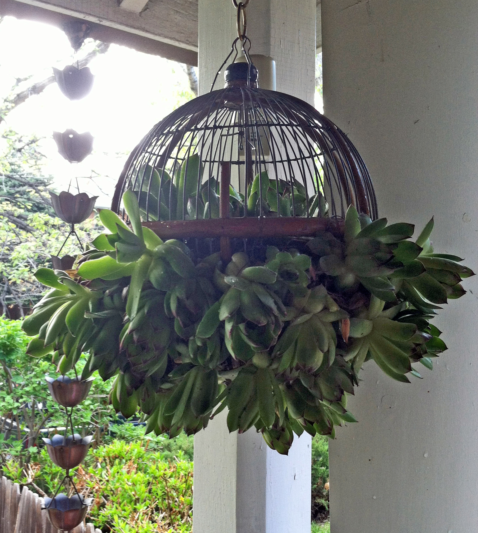 Cute hanging succulent plant ball for the outdoor garden for Plants for outdoor garden