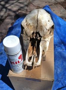 skullbefore