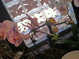 orchidblooms