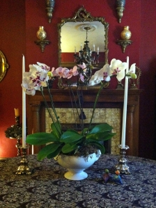 orchiddone2