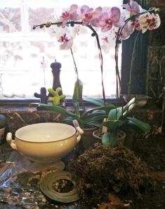 orchidsupplies