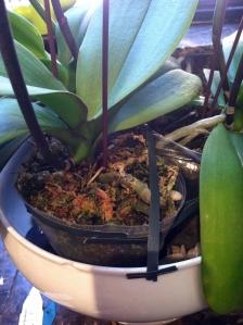 orchidtape