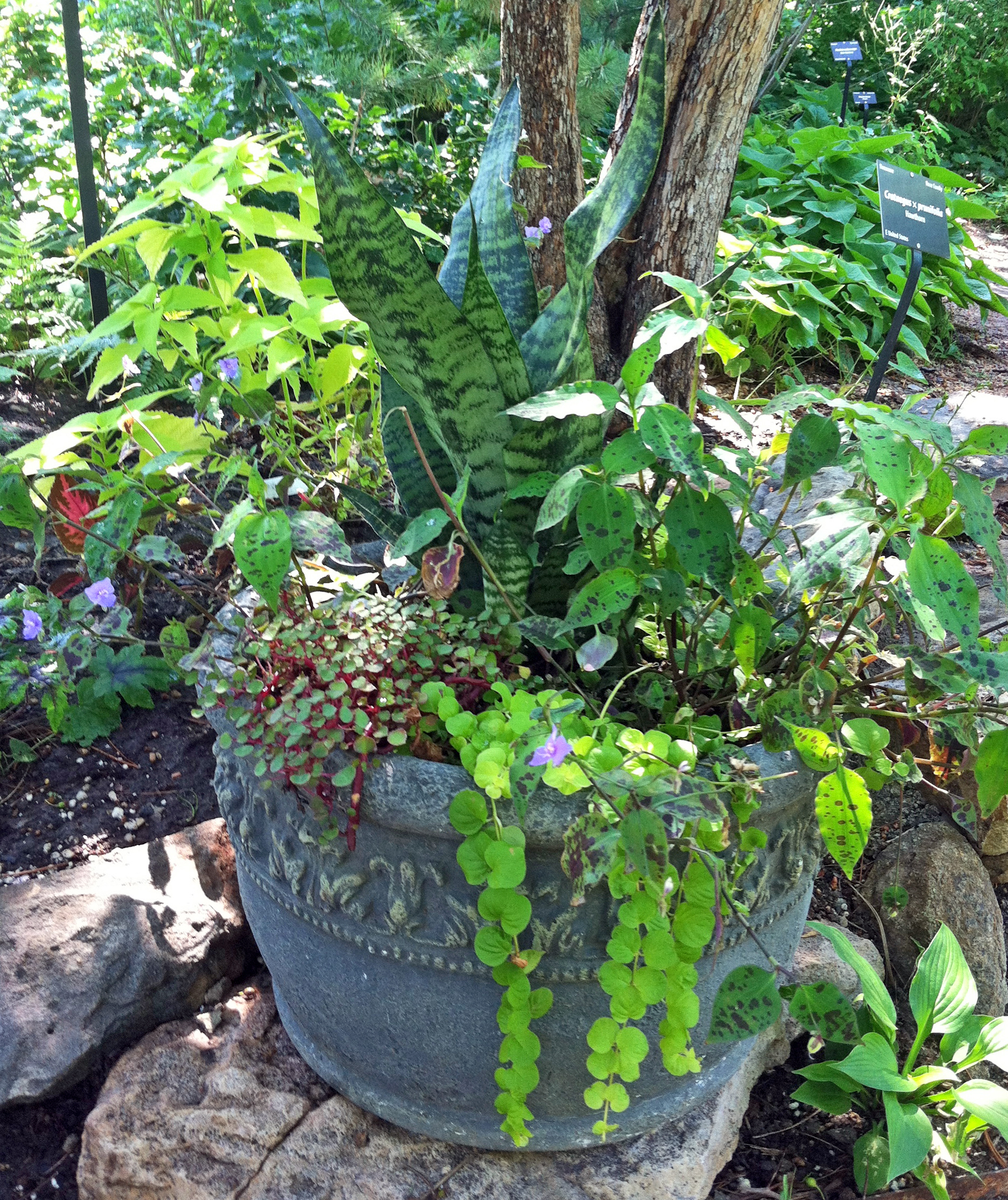 A Lovey All Green Shade Pot At The Base Of A Tree. Who Needs Flowers? A  Nice Combination Of Shades And Textures Works Great, As This Pretty Pot  Proves.