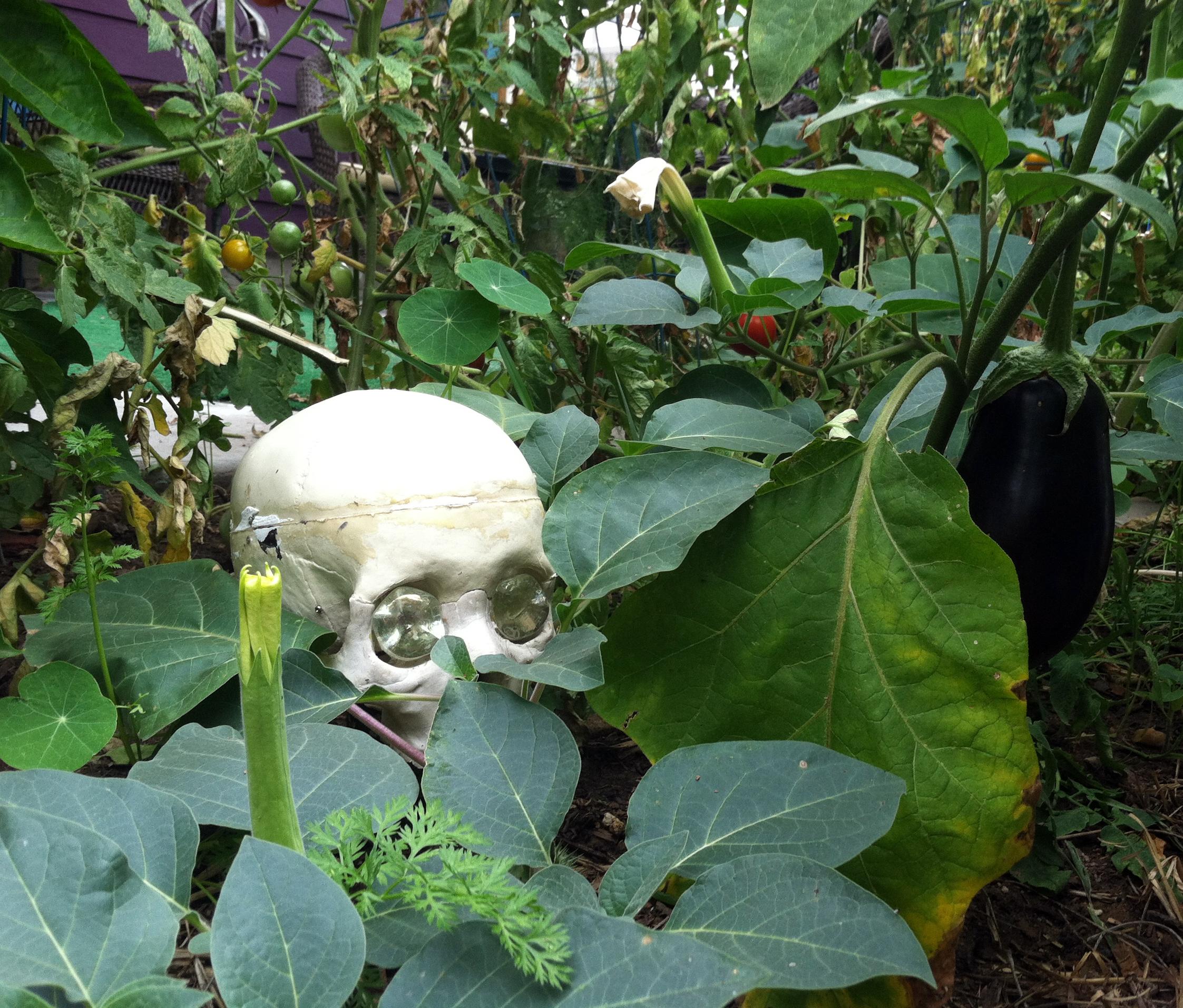 Big Crazy Bohemian Garden…it's Not Mine, It's Tiffany's