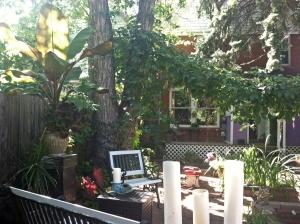backyard12sept2013