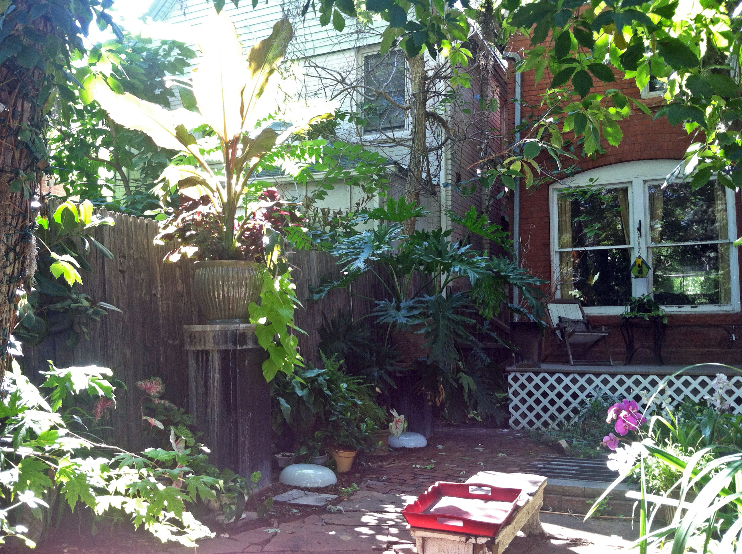 How I Made a Tropical Backyard Oasis in Denver on a Cheap ... on Tropical Backyards  id=39655