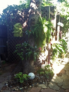 backyard19sept2013