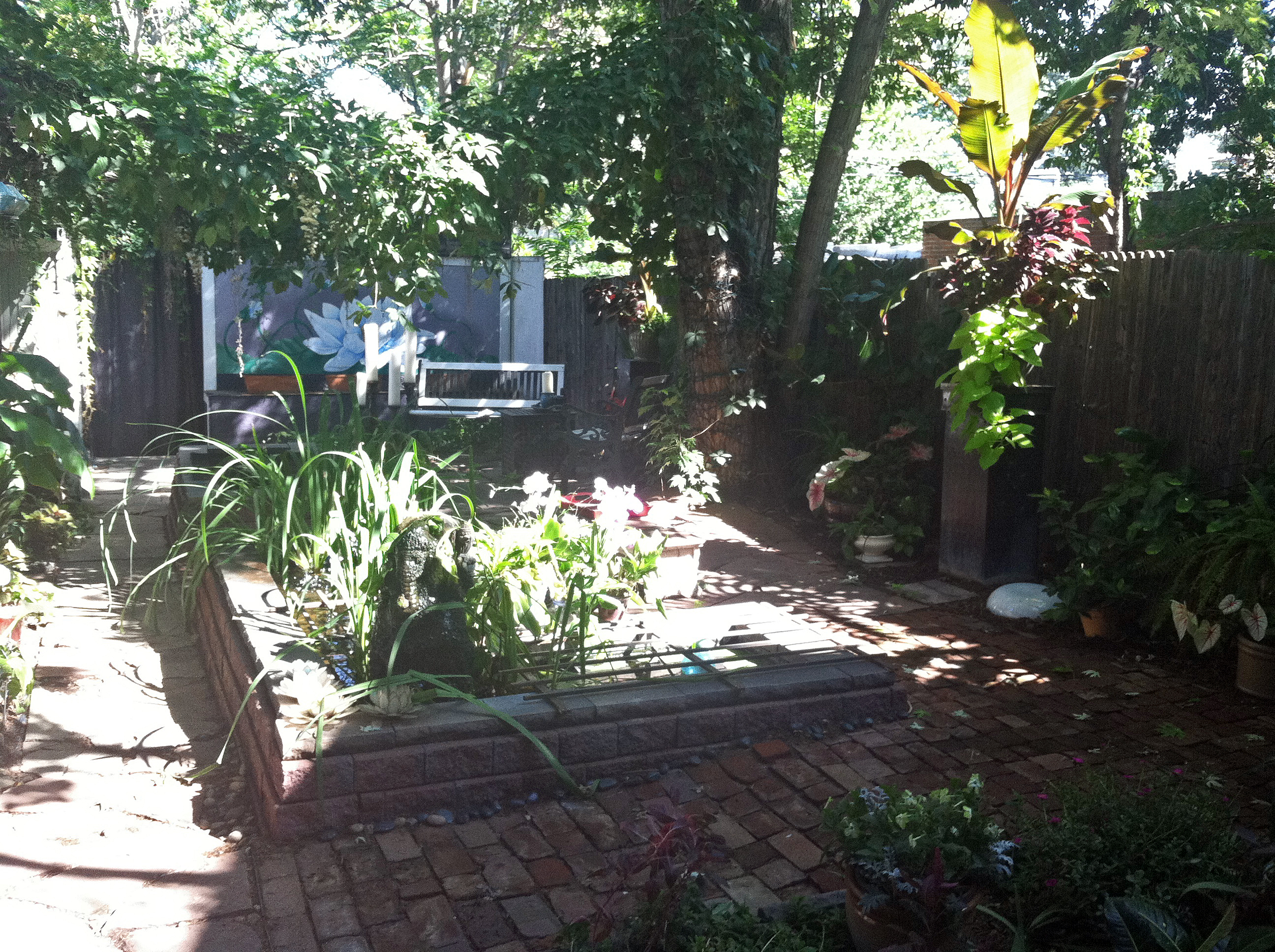 how i made a tropical backyard oasis in denver on a cheap