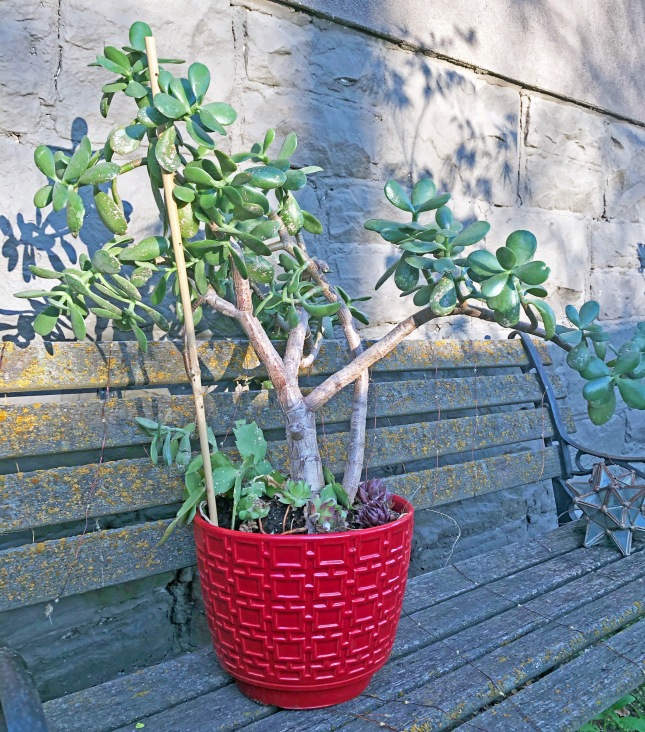 succulentplanter2