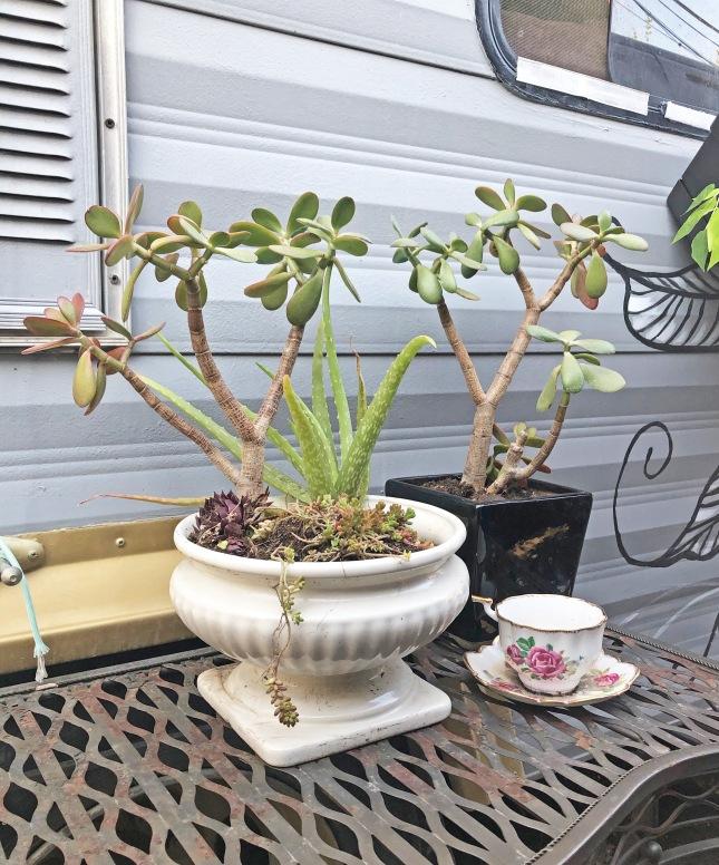 succulentplanter3