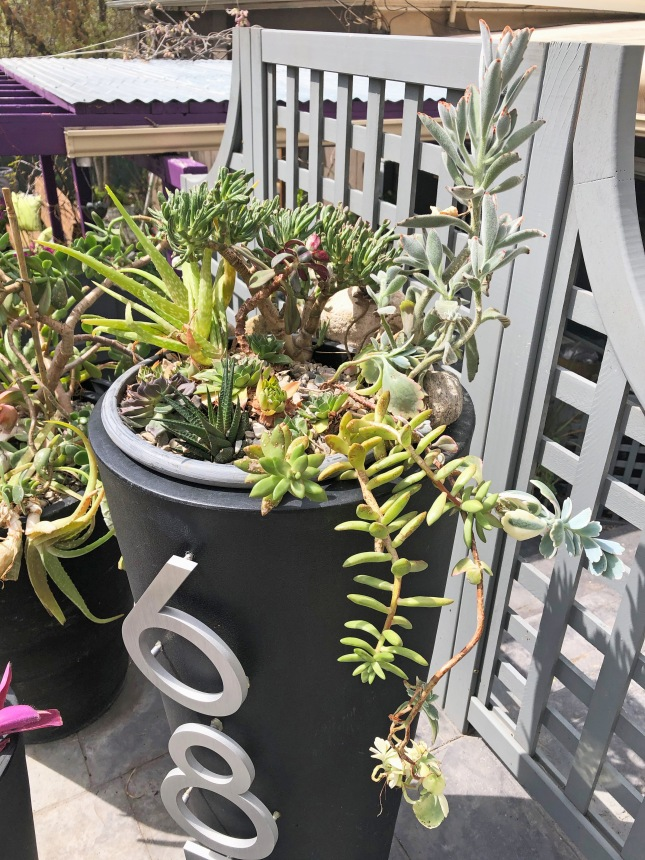 frontplanterssucculents8