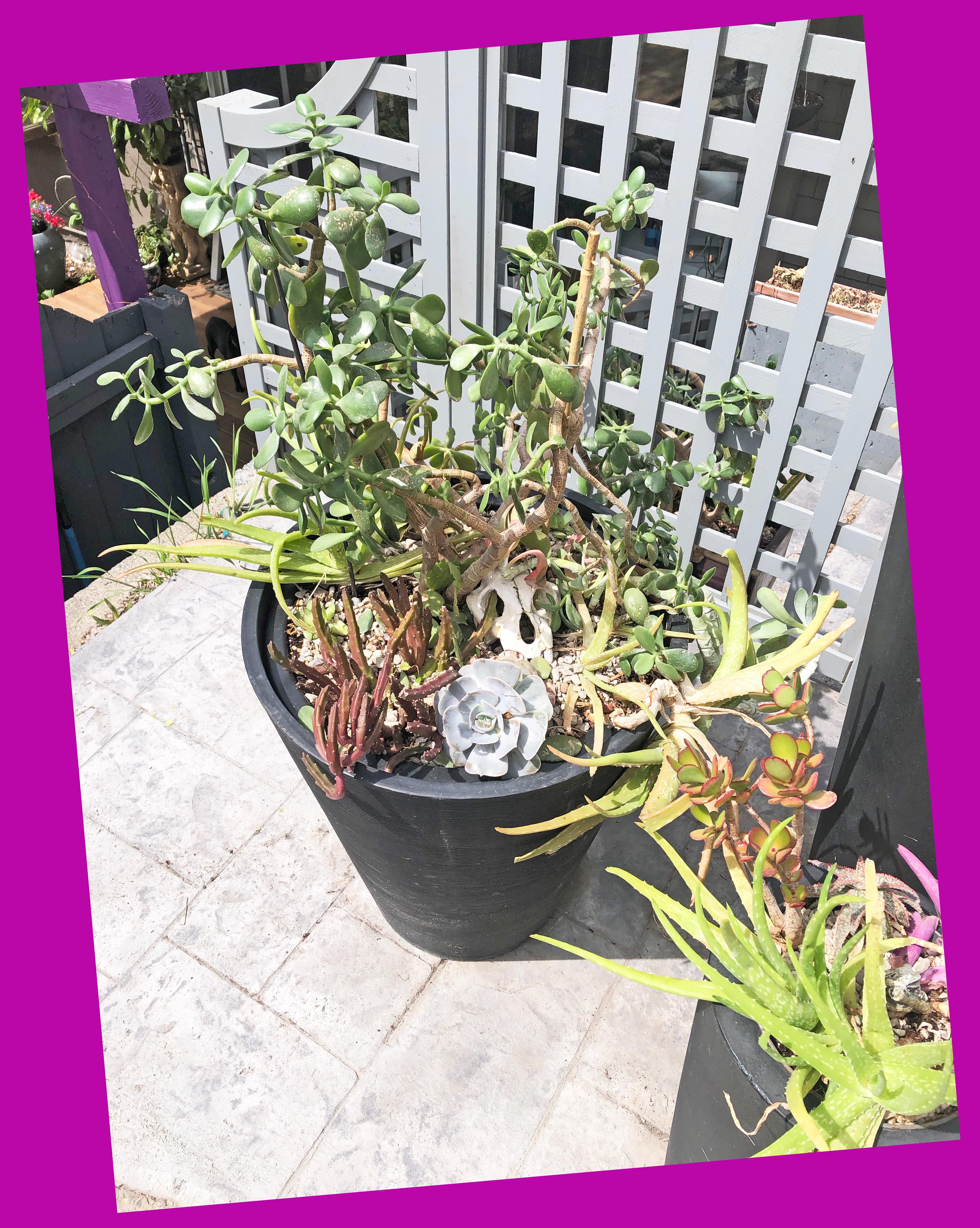 frontplanterssucculents4
