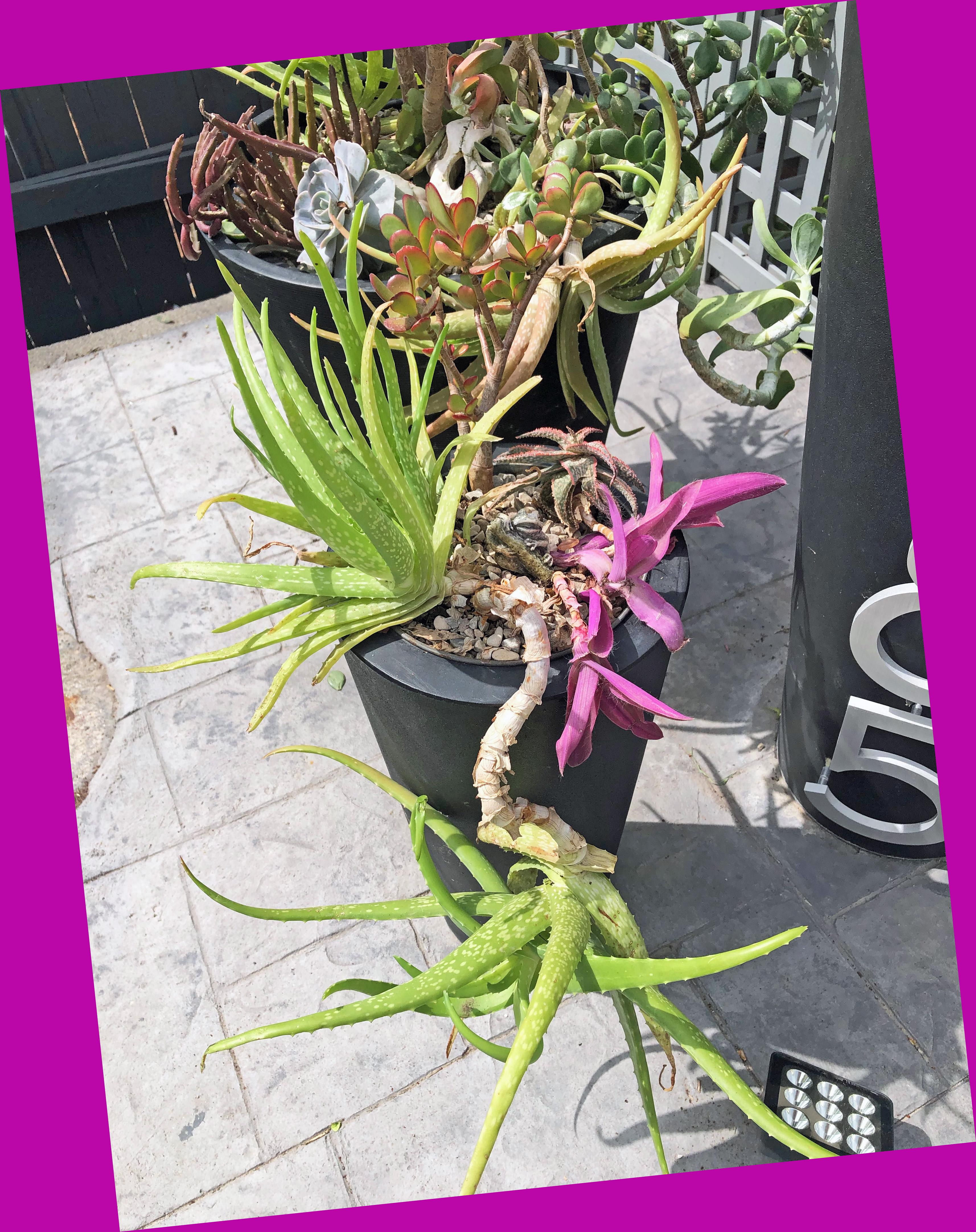 frontplanterssucculents3