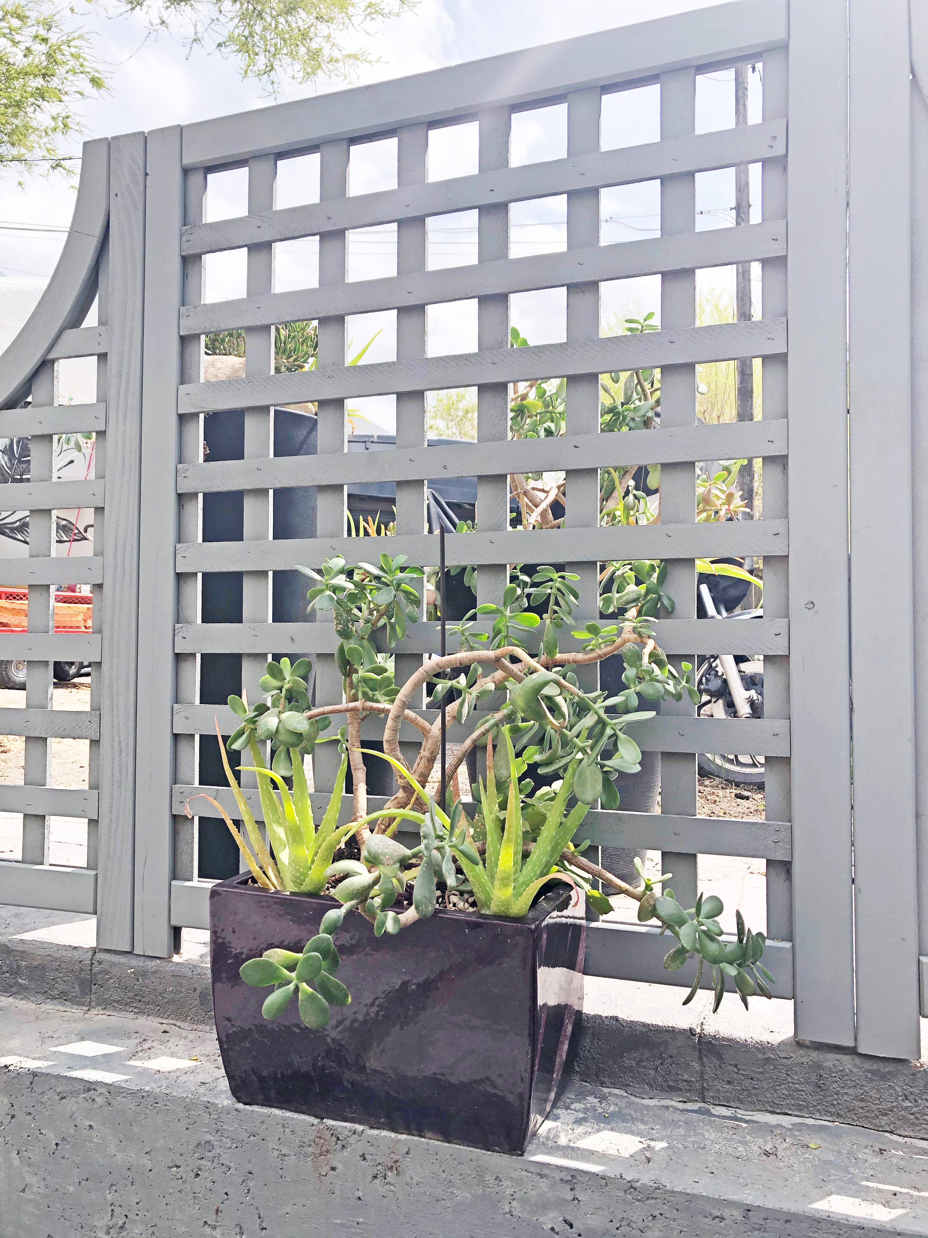 frontplanterssucculents6