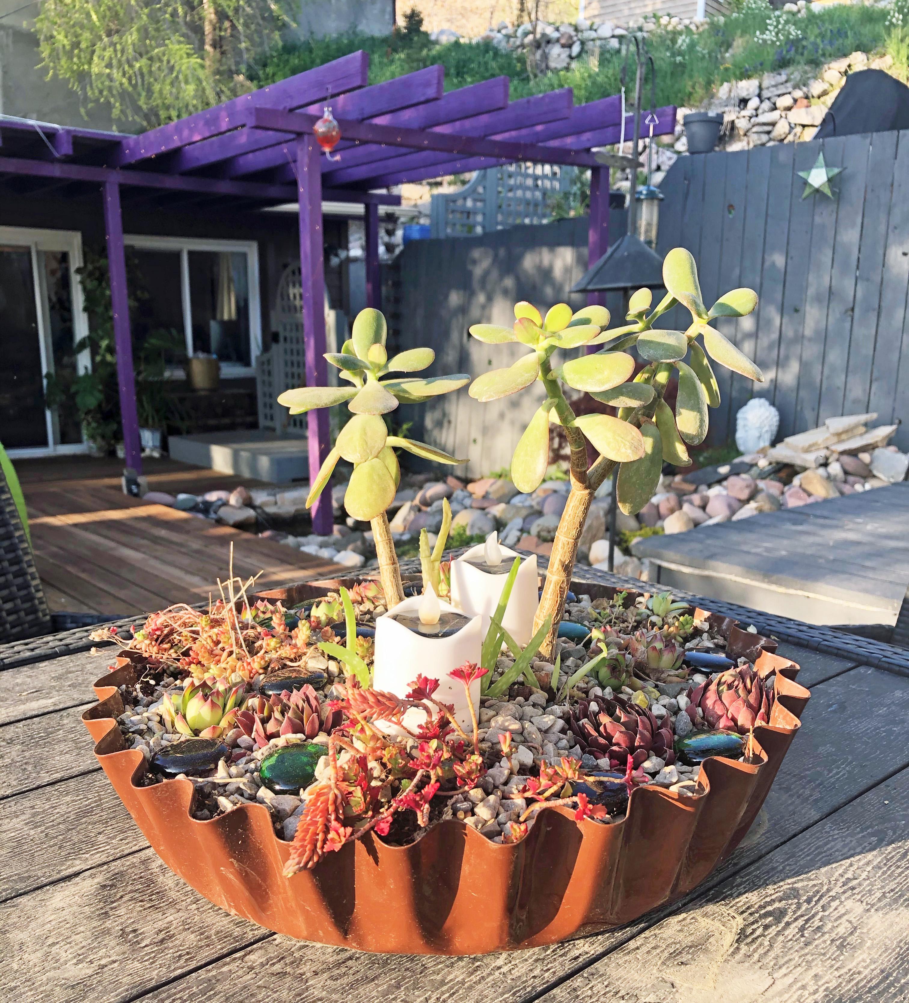 succulentplanters1
