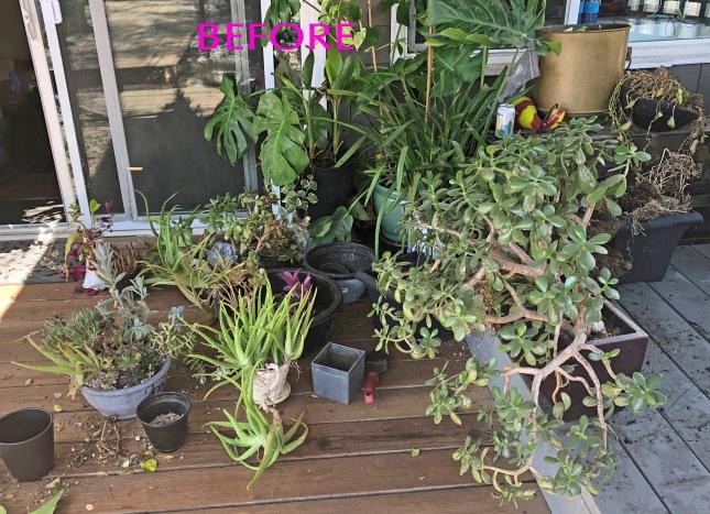 frontplanterssucculents2